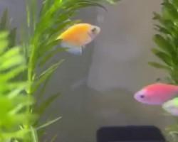 I like aquarium fish
